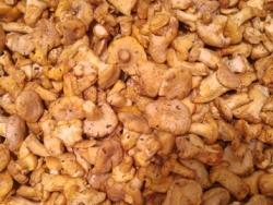Sarı Mantar 0-3 cm